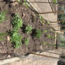 Garden Update2