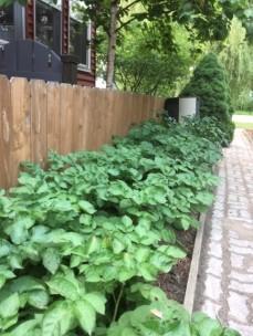 Garden July 8, '19