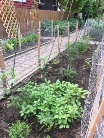 Garden July 8 '19 2