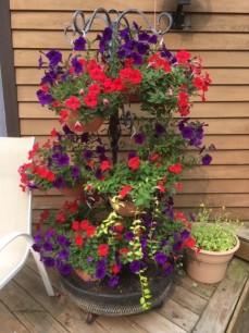 Garden July 8 '19 3