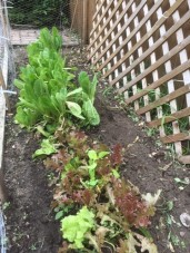 Garden August1