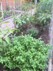 Garden August4