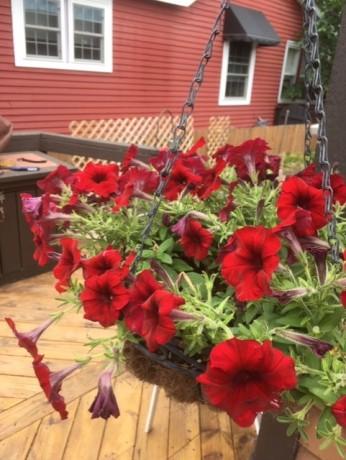Garden August6