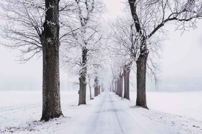 snowy pathway surrounded by bare tree